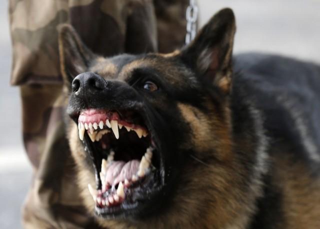 police-dog-bite